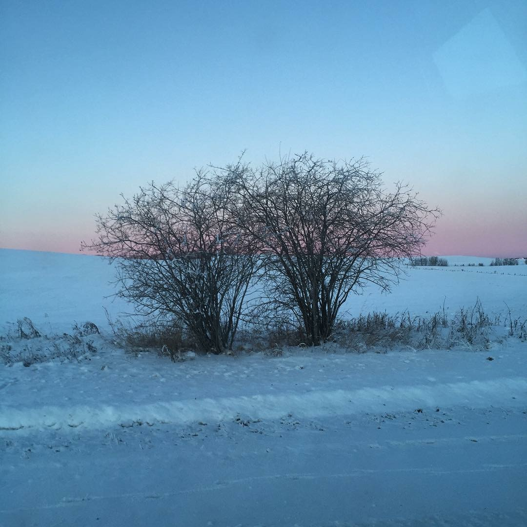 Breathe...  Winter tree