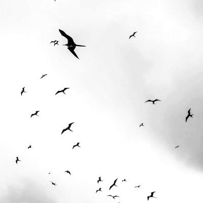 Isla PLata Sky