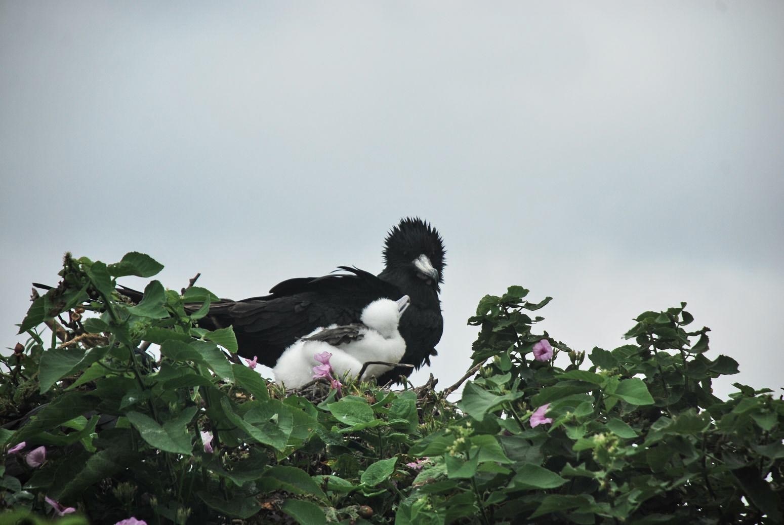 Isla PLata birds