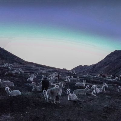 Andes_Lamas
