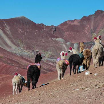 J293 à 295, Sur la route de Cuzco à Arequipa: Ballade haute en couleurs au sommet des Andes Péruviennes…