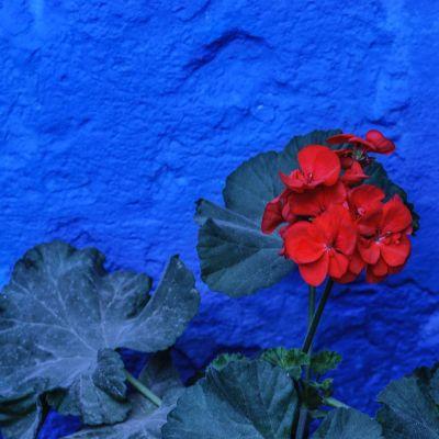 Couvent_Arequipa_Bleu