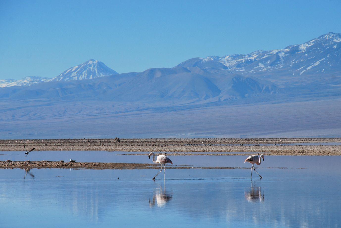 Atacama_Flamands