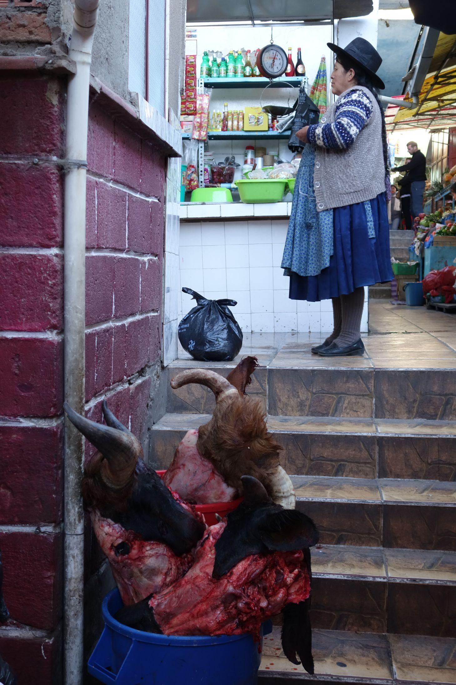 Bolivie_Potosi_Boeuf