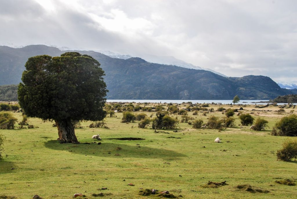 Carretera Austral_lonely tree