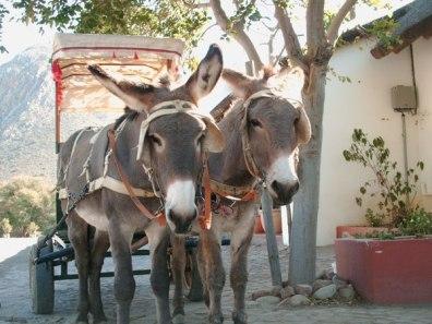 Donkey cart ride, Montagu
