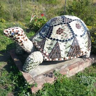 Mosaic tortoise, Sedgefield