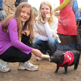 Charles the miniature pig, Searle's Trading Post