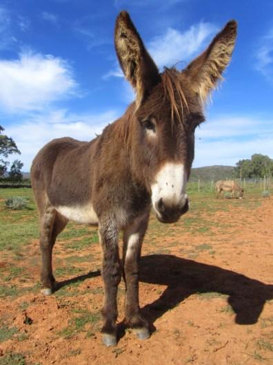 Eseltjiesrus Donkey Sanctuary, McGregor