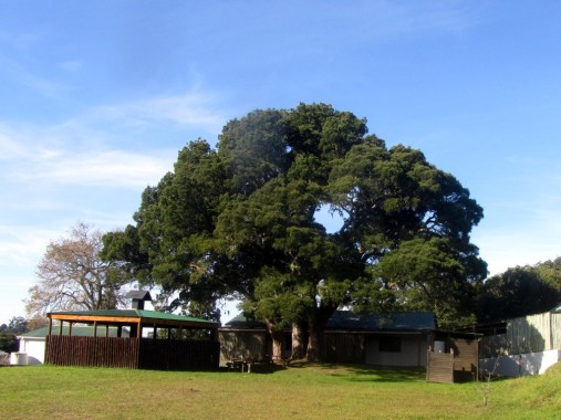Harkerville Hut lapa