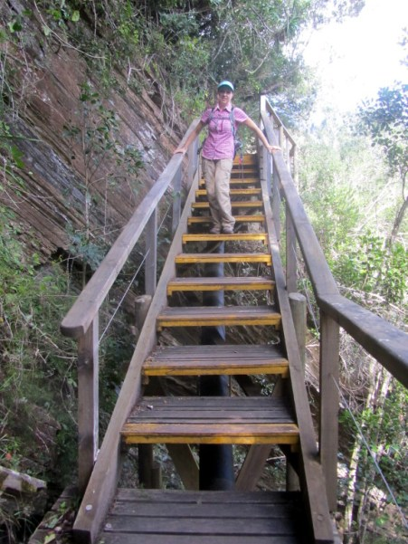 Stairs in the first section of the Giant Kingfisher Trail