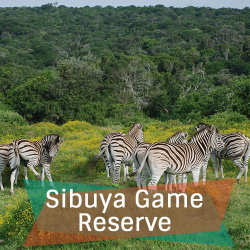 Sibuya Game Reserve New Feature Image