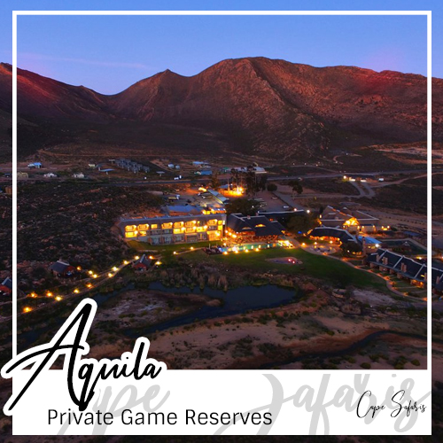 Aquila Private Game Reserve Fetured Image 2019