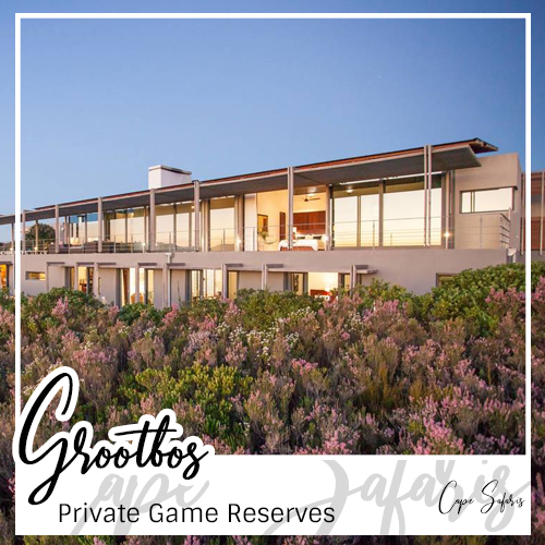 Grootbos Private Game Reserve Fetured Image 2019