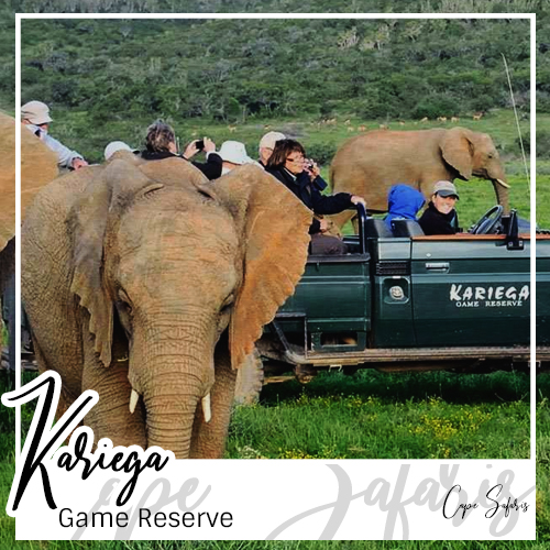Kariega Game Reserve Fetured Image 2019