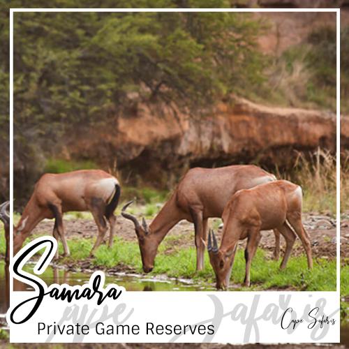 Samara Private Game Reserve Fetured Image 2019