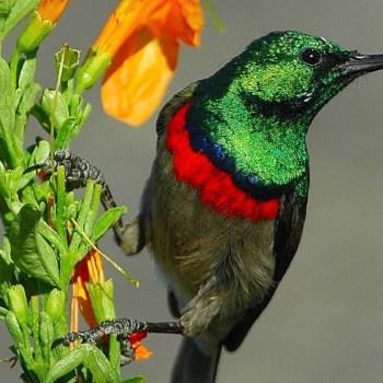 Grootbos Villa Sunbird