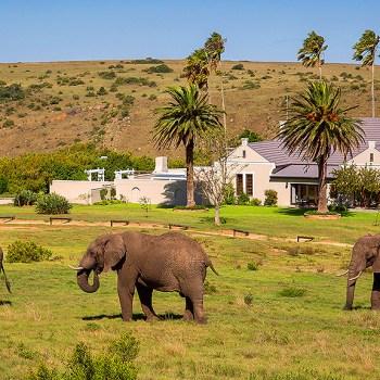 Mills Manor Elephants