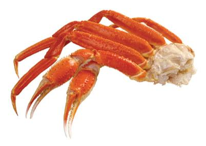 Image result for Snow Crab