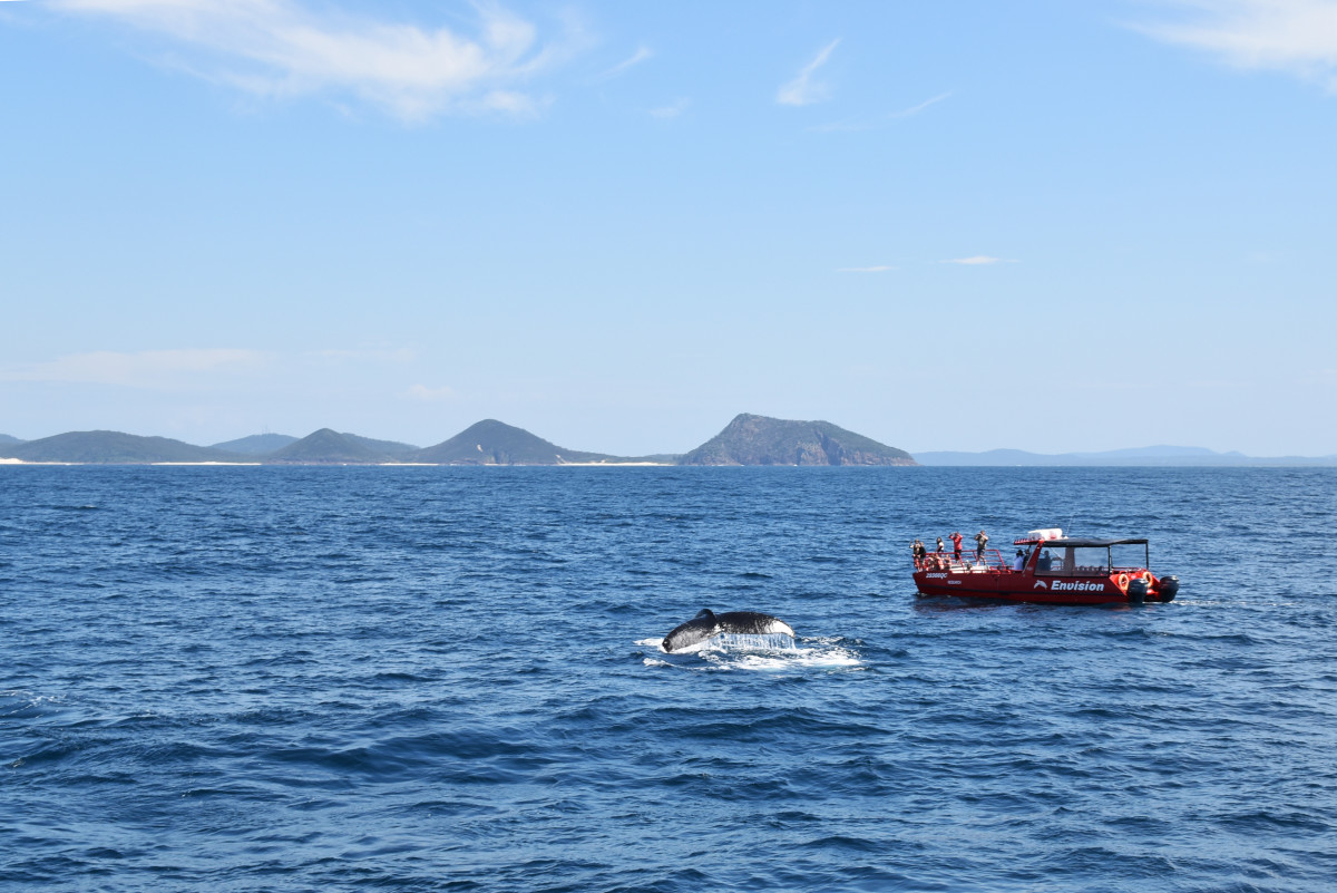 Port Stephens whale watching // Australia
