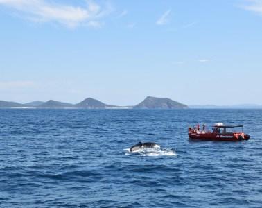 Port Stephens whale watching // Australia