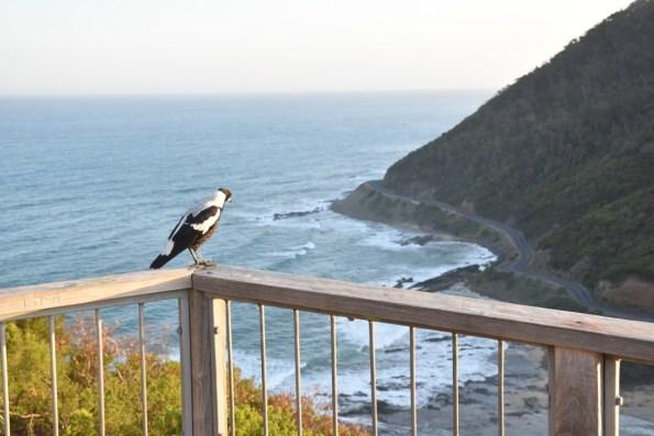 Teddy's Lookout Great Ocean Road Victoria Australia