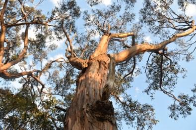 Gumtree Victoria Australia