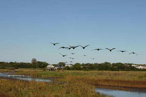 bird-landscape