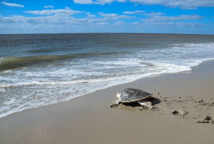 Web-FB 10-3-2017 turtles_-5