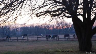 eveninghorses72