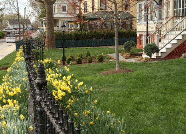 Springing up along the fence