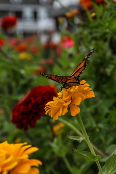Butterflies at 1015 Beach Ave