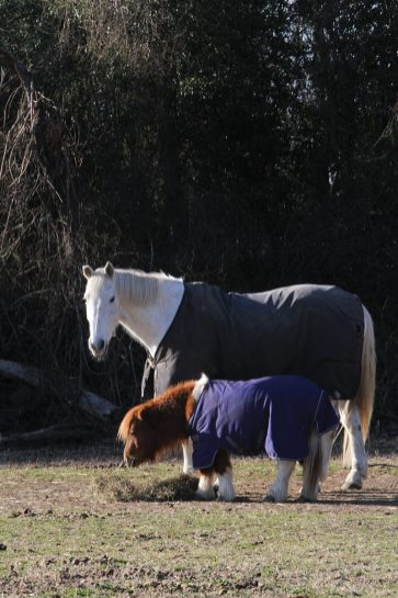 Horse and pony at Hidden Valley Ranch