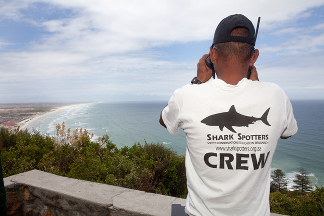 57202f269cc7 Can we use GIS to improve the Shark Spotters program  - Cape RADD