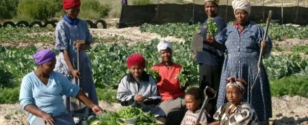 Image result for cape town women of farm project