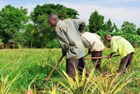 L'agence américaine DFC cherche à investir 1 milliard $ dans le secteur agricole et au sein des pays émergents