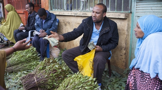 Mustafa, a local khat exporter based in Awaday, Ethiopia, examines fresh khat brought to the market in Awaday for export on July 30, 2014/AFP