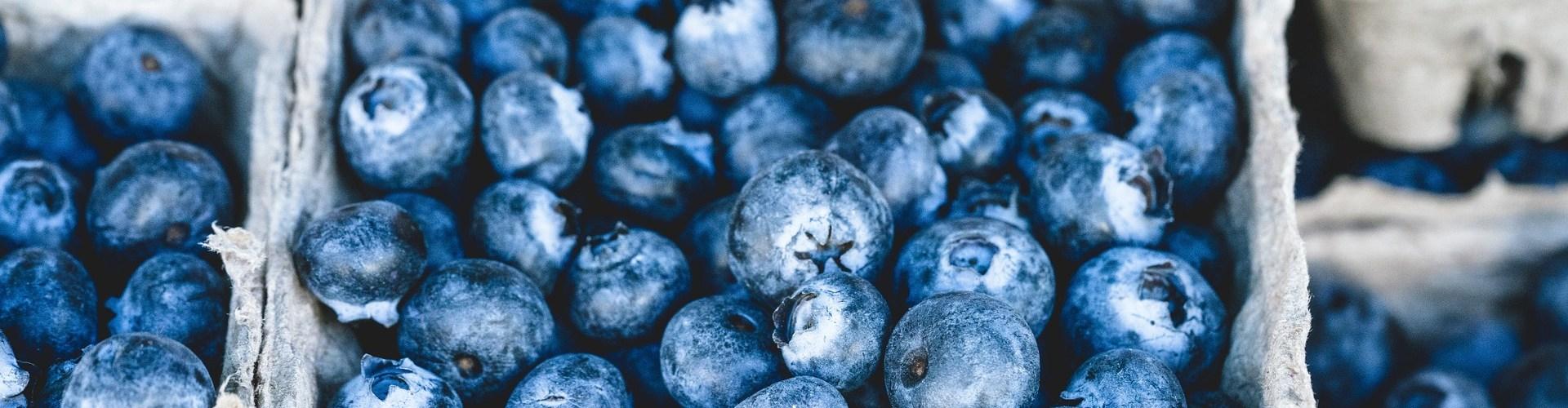 myrthilles bleues françaises