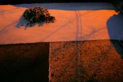 piets_winter