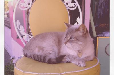 Pretty kitty (Image: Pretty Parlor)