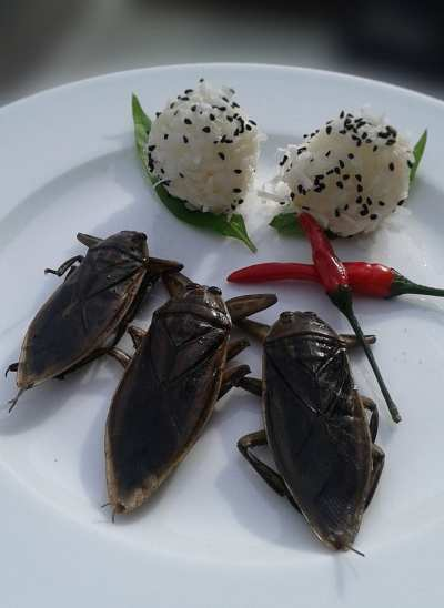 """This week's Special, Mang Da Na (Giant Thai Water Beetle). Their flavor is heavily floral with a hint of salt and spice and are eaten as a snack throughout many parts of SE Asia. The extracted essence is also used as a flavoring for several traditional dishes but due to its scarcity, an artificial version is often used. As these are the real Mccoy, we are serving them traditionally plain with a side of pickled Thai chili and a sticky rice ball accompaniment. Supply is limited so get 'em while you can!"""