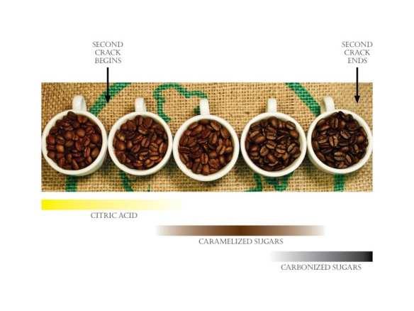 (Image: Espresso Vivace)