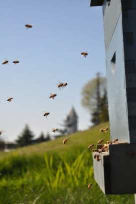 (Images: Urban Bee Co.)