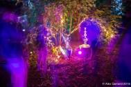 Luminous Garden1
