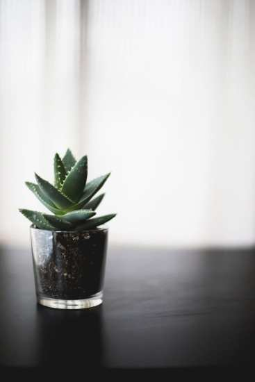 Hands-on Happy Hour: Sips and Succulents @ Seattle Seed Company