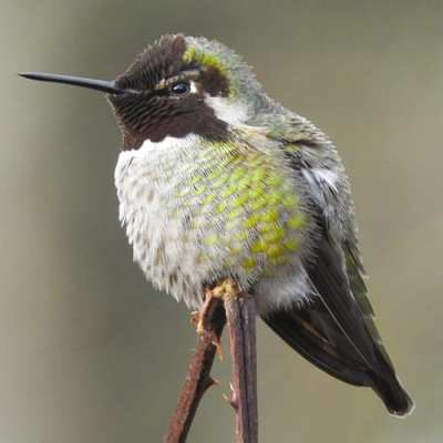Hummingbirds: Living Jewels of the Sky @ Center for Urban Horticulture