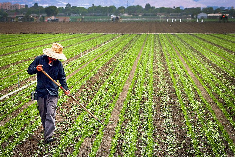 Why Farmworkers Will Regret Earning More Overtime