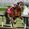 2011 Belmont Stakes Props: Bodog Betting Odds