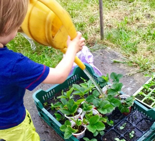 Las watering garden