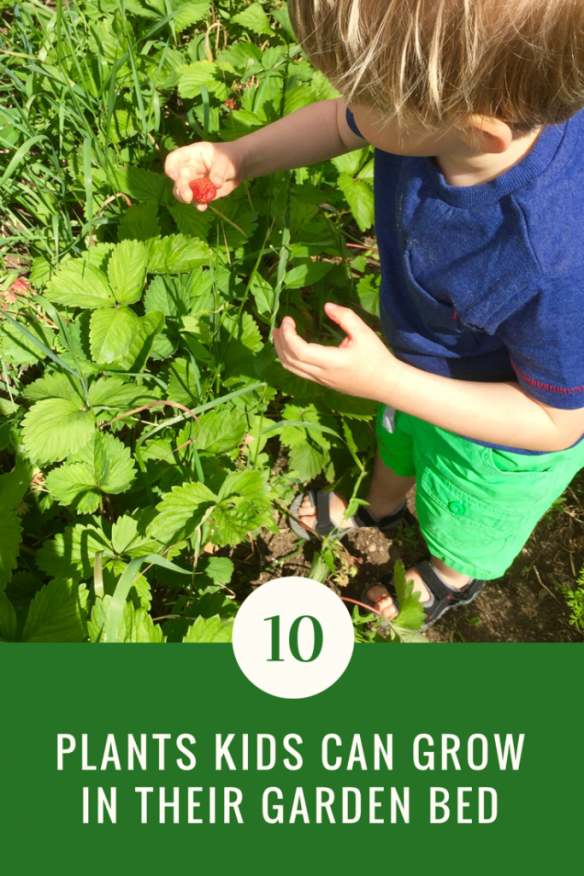 10 Plants Kids Can Grow in Their Garden Bed